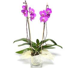 Orchid with arrangement.